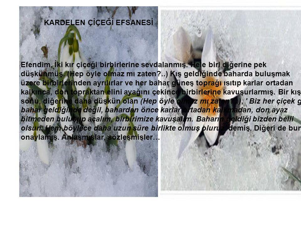 ayaynuri@hotmail.com Bu şiiri 3 ncü şark hizmetim Kardelen çiçeğinin çok olduğu SARIKAMIŞ'ta yazdım. Karda yürürkün dağ yamacında GördümKARDELENİ, Etk