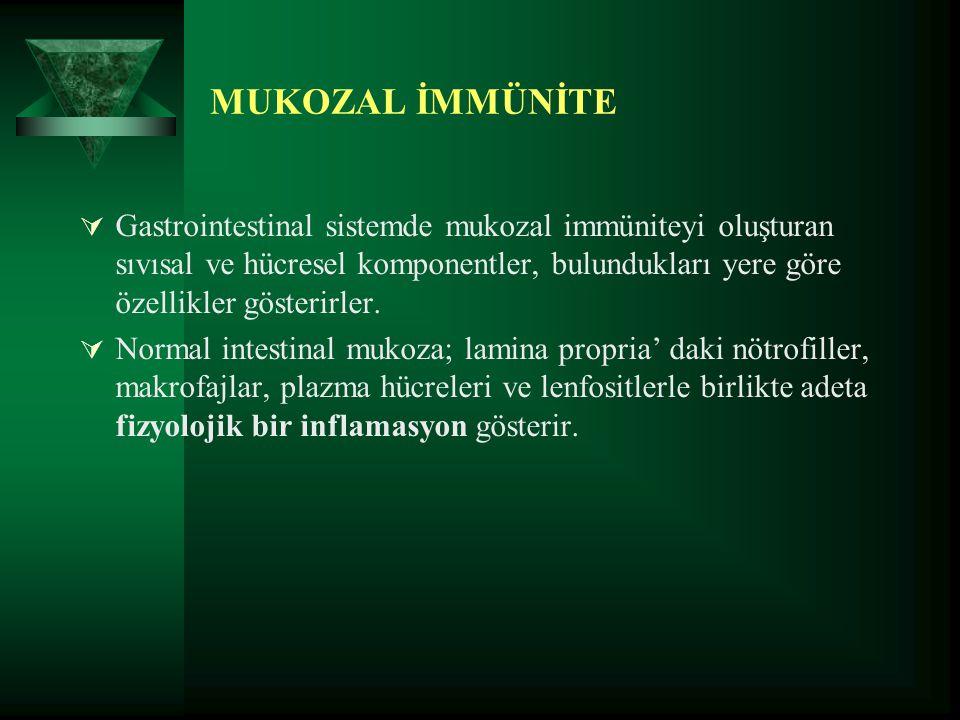MUKOZAL İMMÜNİTE  Gastrointestinal sistemde mukozal immüniteyi oluşturan sıvısal ve hücresel komponentler, bulundukları yere göre özellikler gösterir