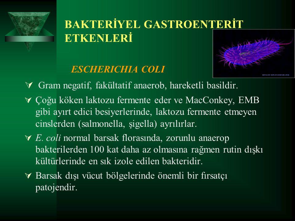 BAKTERİYEL GASTROENTERİT ETKENLERİ ESCHERICHIA COLI  Gram negatif, fakültatif anaerob, hareketli basildir.  Çoğu köken laktozu fermente eder ve MacC