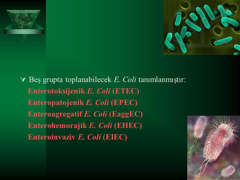  Beş grupta toplanabilecek E. Coli tanımlanmıştır: Enterotoksijenik E. Coli (ETEC) Enteropatojenik E. Coli (EPEC) Enteroagregatif E. Coli (EaggEC) En