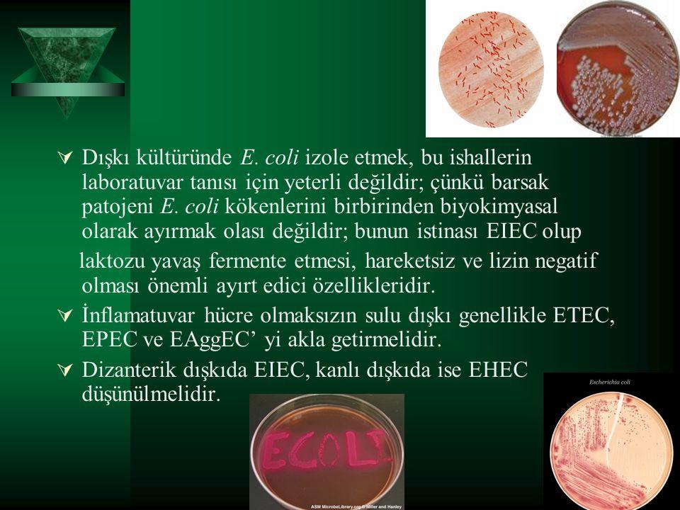  Dışkı kültüründe E. coli izole etmek, bu ishallerin laboratuvar tanısı için yeterli değildir; çünkü barsak patojeni E. coli kökenlerini birbirinden