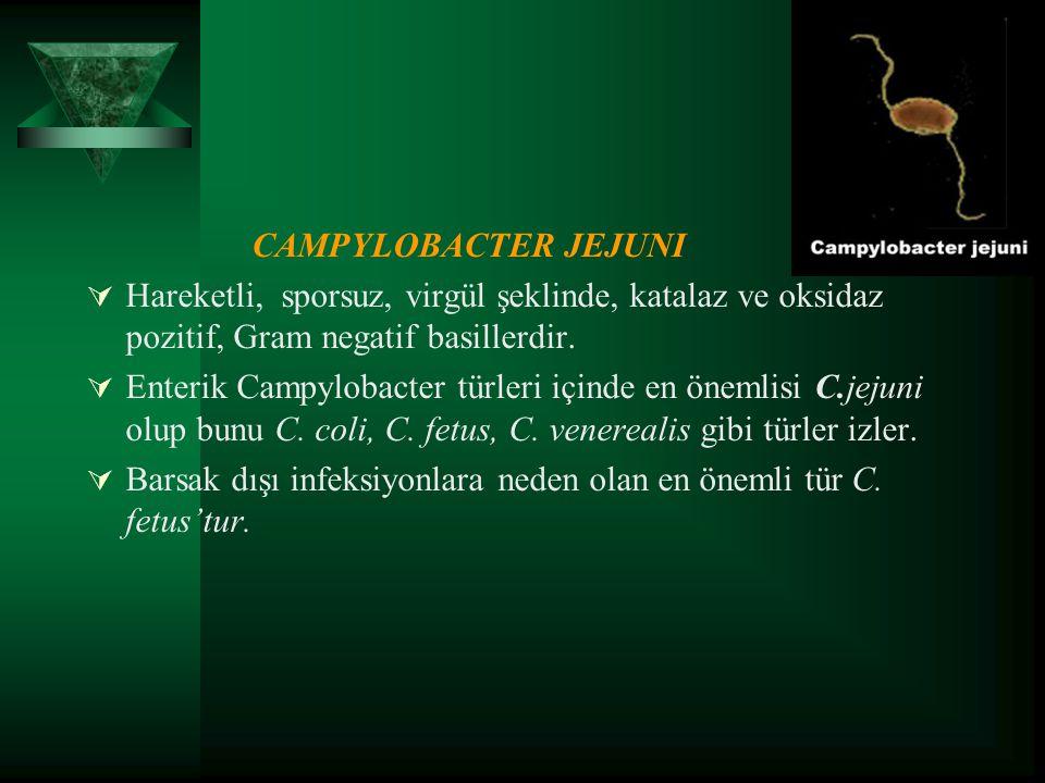 CAMPYLOBACTER JEJUNI  Hareketli, sporsuz, virgül şeklinde, katalaz ve oksidaz pozitif, Gram negatif basillerdir.  Enterik Campylobacter türleri için