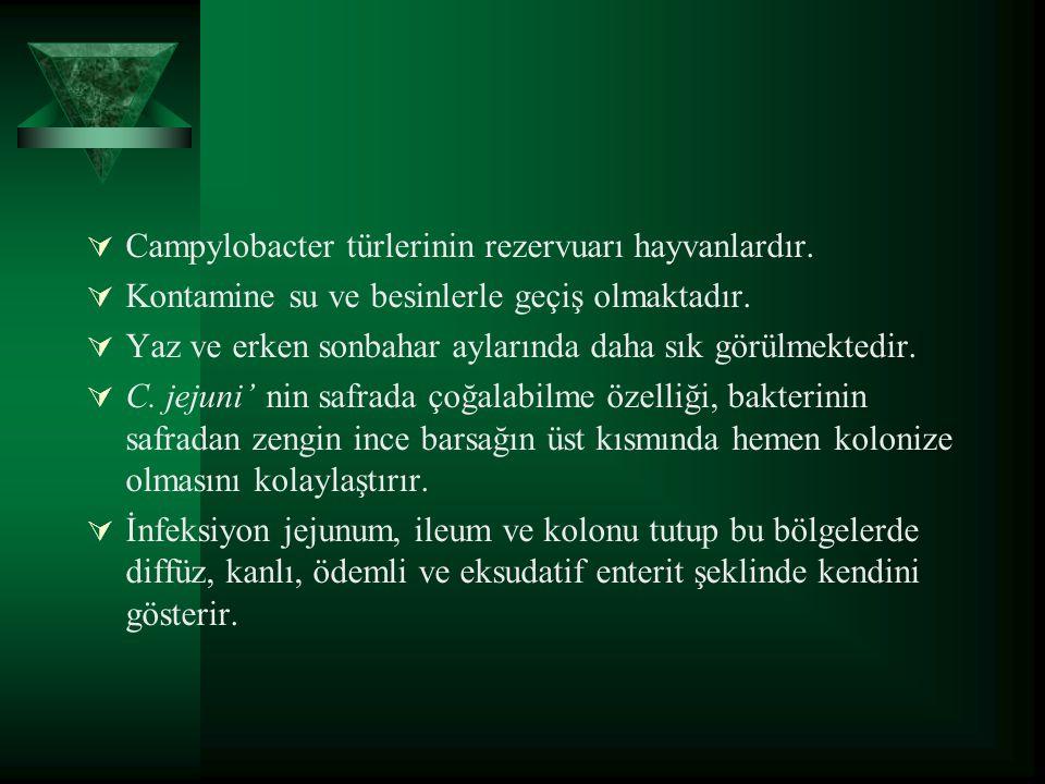  Campylobacter türlerinin rezervuarı hayvanlardır.  Kontamine su ve besinlerle geçiş olmaktadır.  Yaz ve erken sonbahar aylarında daha sık görülmek
