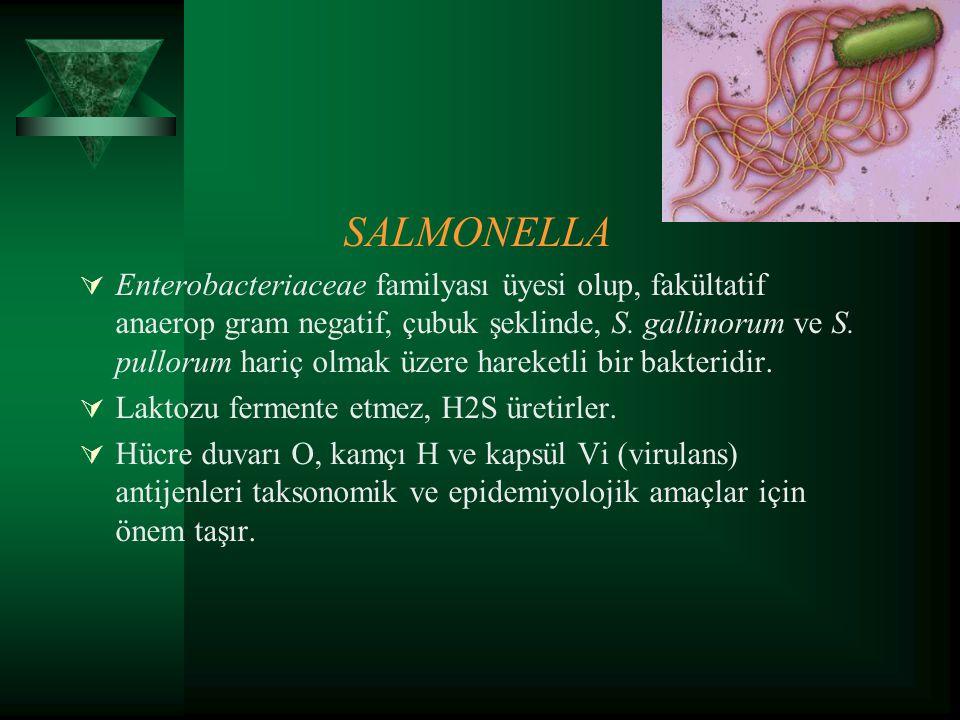 SALMONELLA  Enterobacteriaceae familyası üyesi olup, fakültatif anaerop gram negatif, çubuk şeklinde, S. gallinorum ve S. pullorum hariç olmak üzere