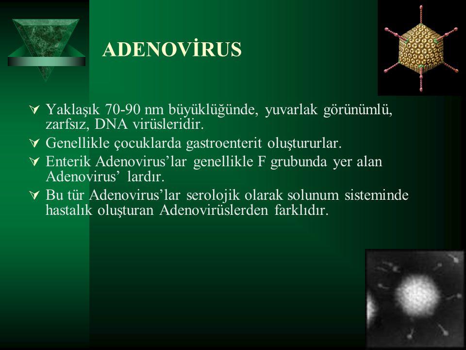 ADENOVİRUS  Yaklaşık 70-90 nm büyüklüğünde, yuvarlak görünümlü, zarfsız, DNA virüsleridir.  Genellikle çocuklarda gastroenterit oluştururlar.  Ente