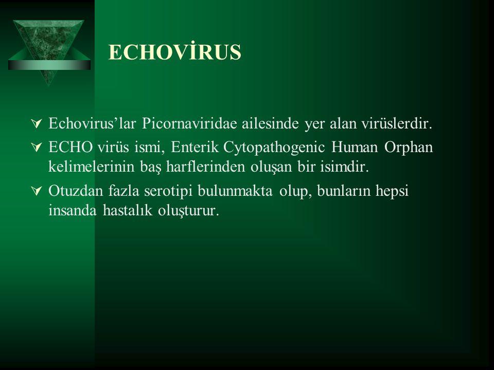 ECHOVİRUS  Echovirus'lar Picornaviridae ailesinde yer alan virüslerdir.  ECHO virüs ismi, Enterik Cytopathogenic Human Orphan kelimelerinin baş harf
