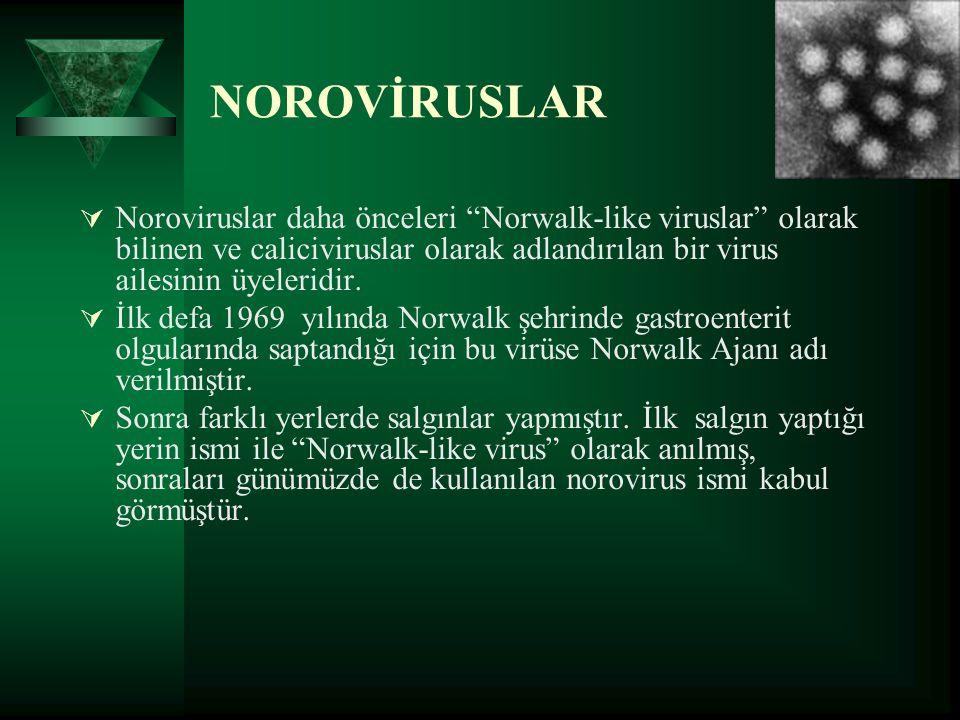 """NOROVİRUSLAR  Noroviruslar daha önceleri """"Norwalk-like viruslar"""" olarak bilinen ve caliciviruslar olarak adlandırılan bir virus ailesinin üyeleridir."""