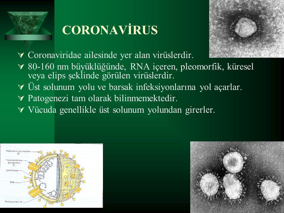 CORONAVİRUS  Coronaviridae ailesinde yer alan virüslerdir.  80-160 nm büyüklüğünde, RNA içeren, pleomorfik, küresel veya elips şeklinde görülen virü