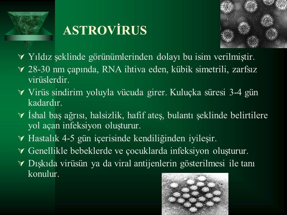 ASTROVİRUS  Yıldız şeklinde görünümlerinden dolayı bu isim verilmiştir.  28-30 nm çapında, RNA ihtiva eden, kübik simetrili, zarfsız virüslerdir. 