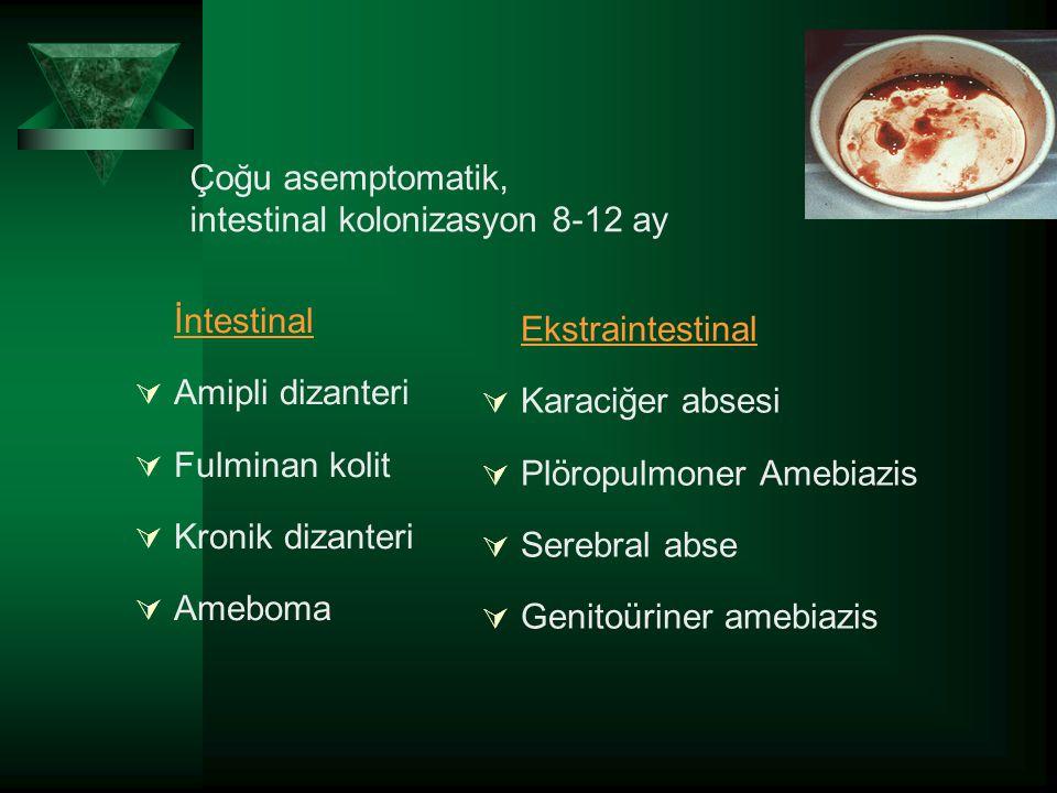 Çoğu asemptomatik, intestinal kolonizasyon 8-12 ay İntestinal  Amipli dizanteri  Fulminan kolit  Kronik dizanteri  Ameboma Ekstraintestinal  Kara