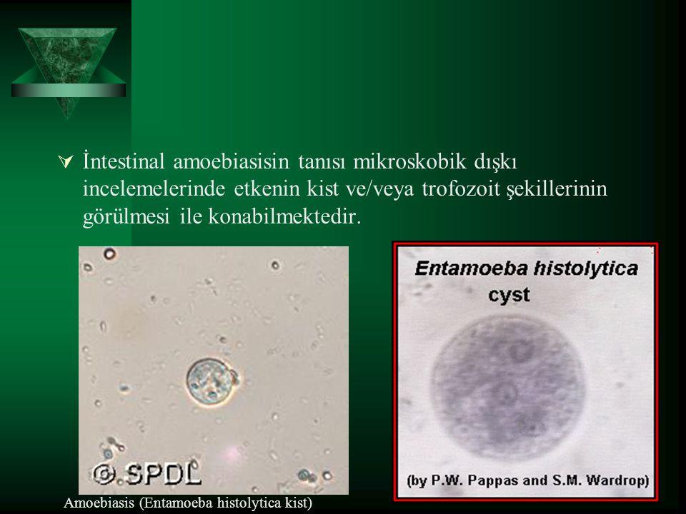  İntestinal amoebiasisin tanısı mikroskobik dışkı incelemelerinde etkenin kist ve/veya trofozoit şekillerinin görülmesi ile konabilmektedir. Amoebias