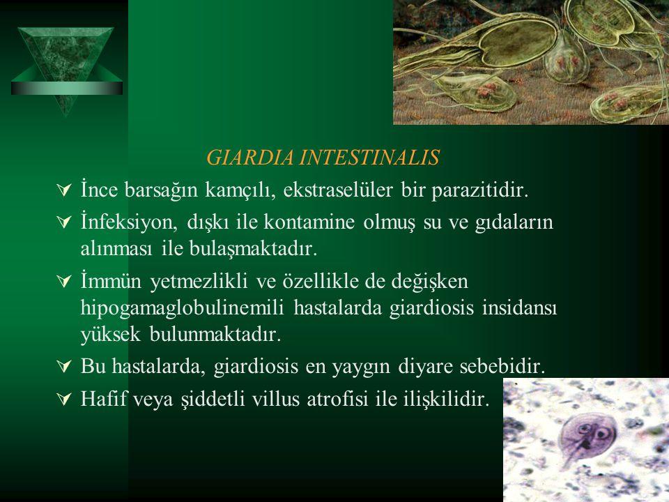 GIARDIA INTESTINALIS  İnce barsağın kamçılı, ekstraselüler bir parazitidir.  İnfeksiyon, dışkı ile kontamine olmuş su ve gıdaların alınması ile bula
