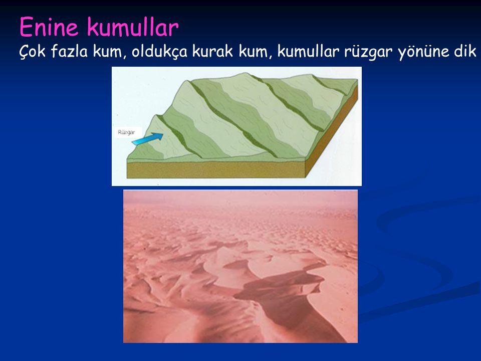 Enine kumullar Çok fazla kum, oldukça kurak kum, kumullar rüzgar yönüne dik