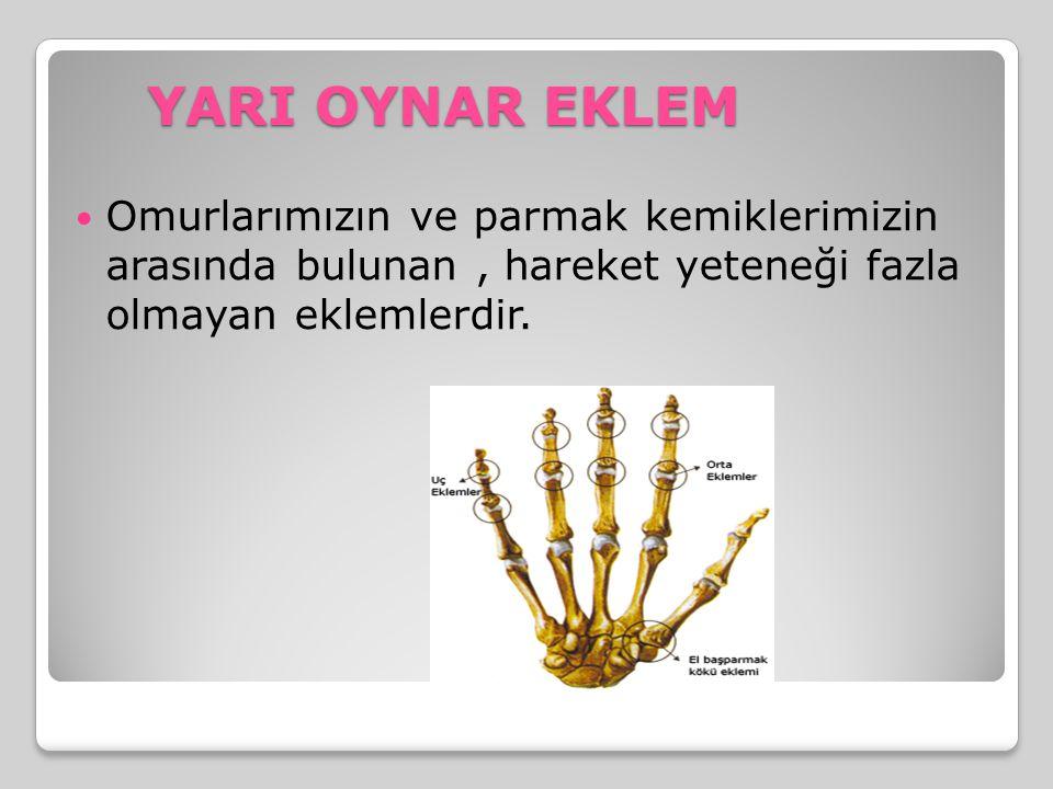 YARI OYNAR EKLEM Omurlarımızın ve parmak kemiklerimizin arasında bulunan, hareket yeteneği fazla olmayan eklemlerdir.