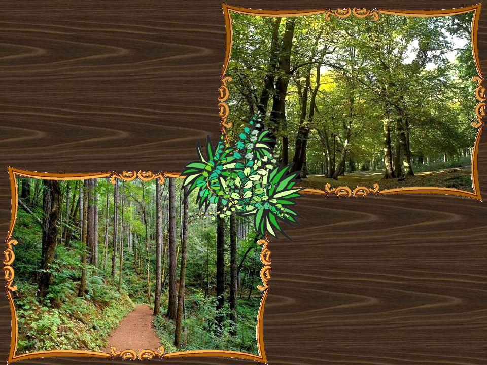 Ormansız bir yurt, vatan değildir. M. Kemal ATATÜRK