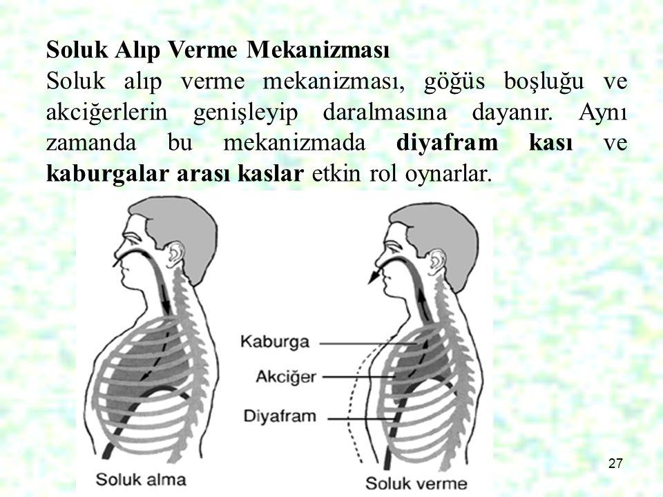 27 Soluk Alıp Verme Mekanizması Soluk alıp verme mekanizması, göğüs boşluğu ve akciğerlerin genişleyip daralmasına dayanır. Aynı zamanda bu mekanizmad