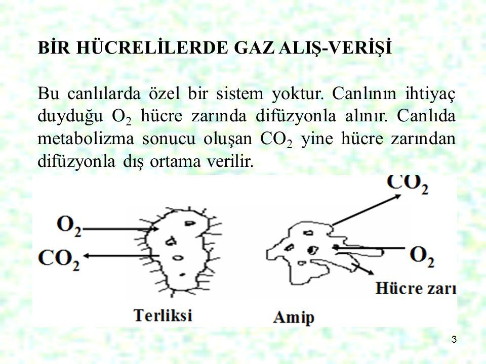 3 BİR HÜCRELİLERDE GAZ ALIŞ-VERİŞİ Bu canlılarda özel bir sistem yoktur. Canlının ihtiyaç duyduğu O 2 hücre zarında difüzyonla alınır. Canlıda metabol