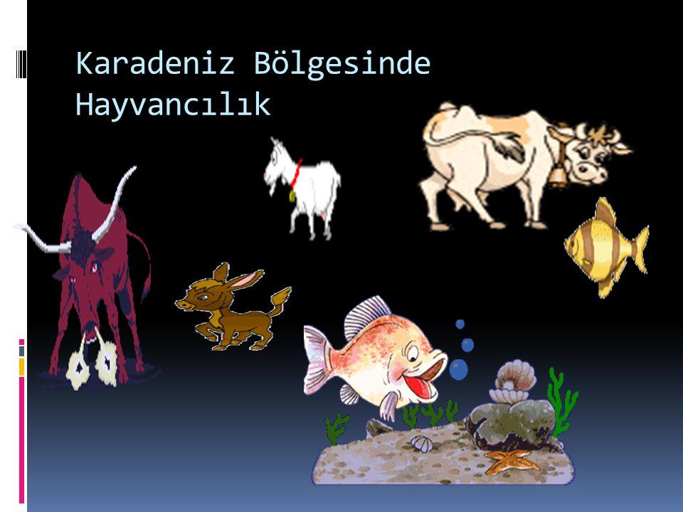 Karadeniz Bölgesinde Hayvancılık