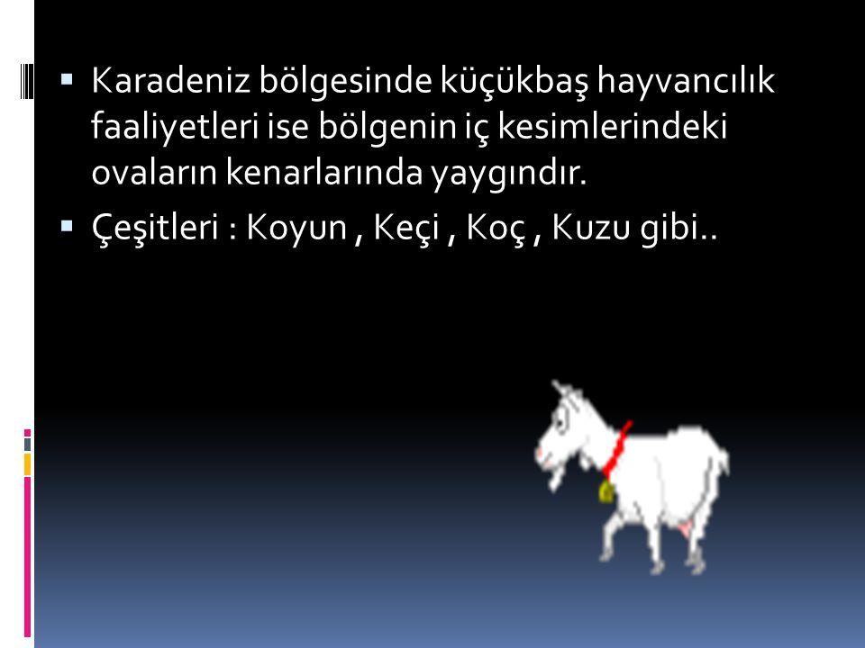  Karadeniz bölgesinde küçükbaş hayvancılık faaliyetleri ise bölgenin iç kesimlerindeki ovaların kenarlarında yaygındır.  Çeşitleri : Koyun, Keçi, Ko
