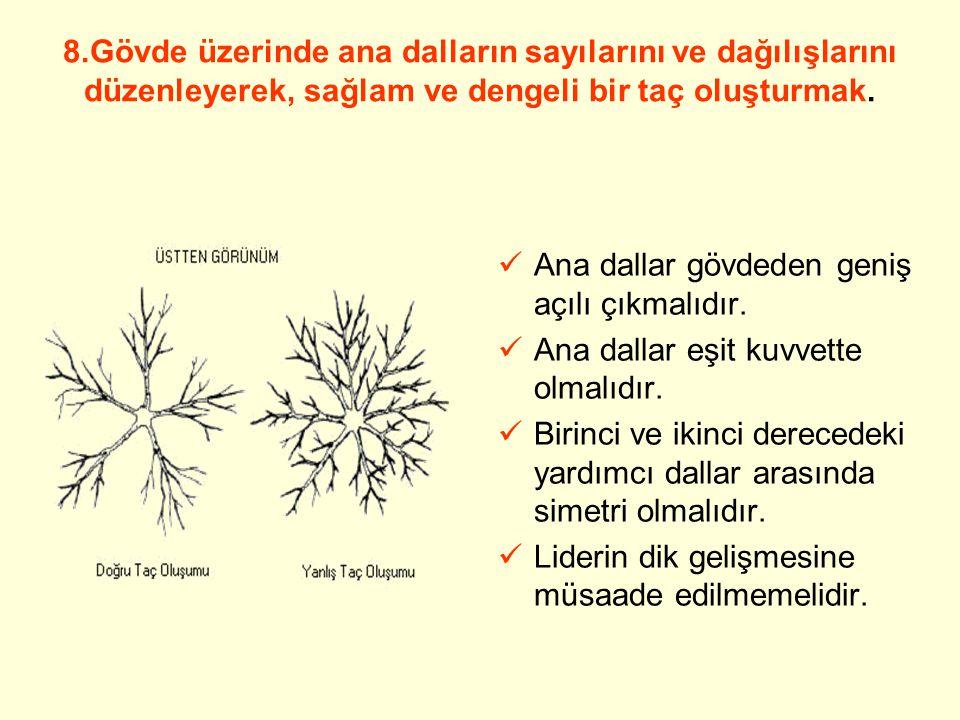 BUDAMA TEKNİĞİ 1.Meyve ağaçlarının özellikle şekillendirme devrelerinde, budama işlemleri odun dallarına uygulanmalı meyve dallarına zorunlu olmadıkça dokunulmamalıdır.