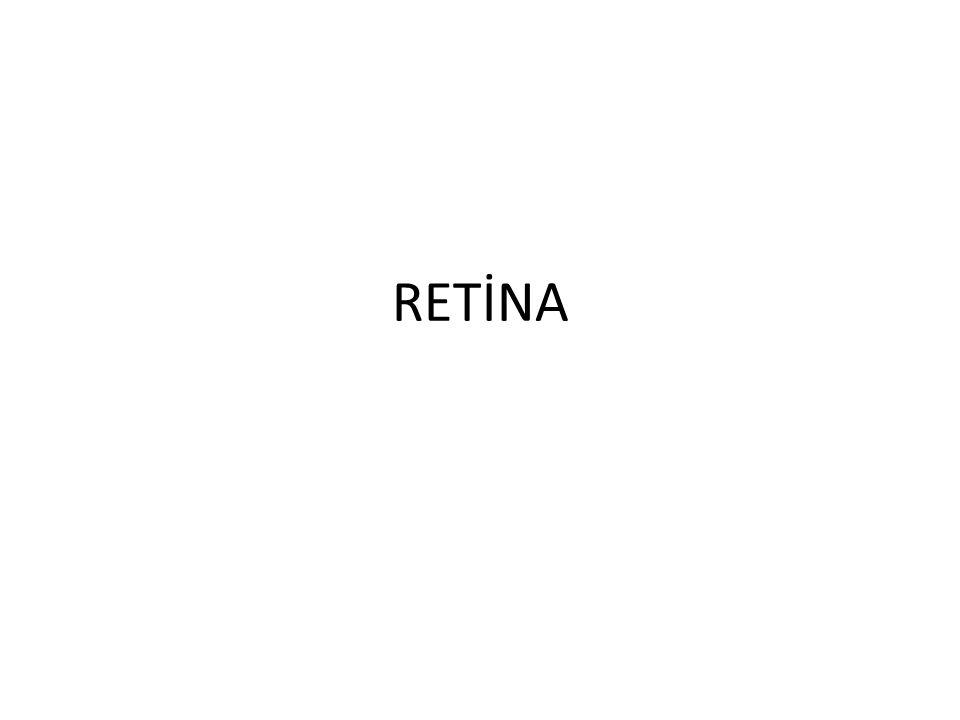 RETİNA