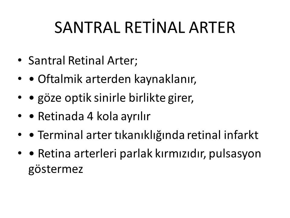 SANTRAL RETİNAL ARTER Santral Retinal Arter; Oftalmik arterden kaynaklanır, göze optik sinirle birlikte girer, Retinada 4 kola ayrılır Terminal arter