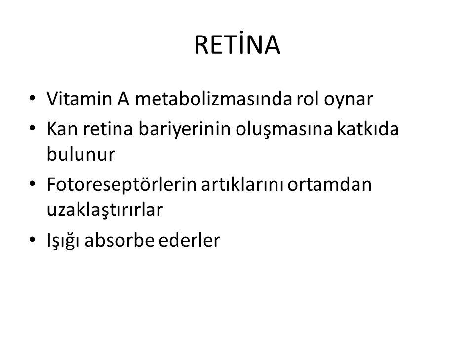 RETİNA Vitamin A metabolizmasında rol oynar Kan retina bariyerinin oluşmasına katkıda bulunur Fotoreseptörlerin artıklarını ortamdan uzaklaştırırlar I