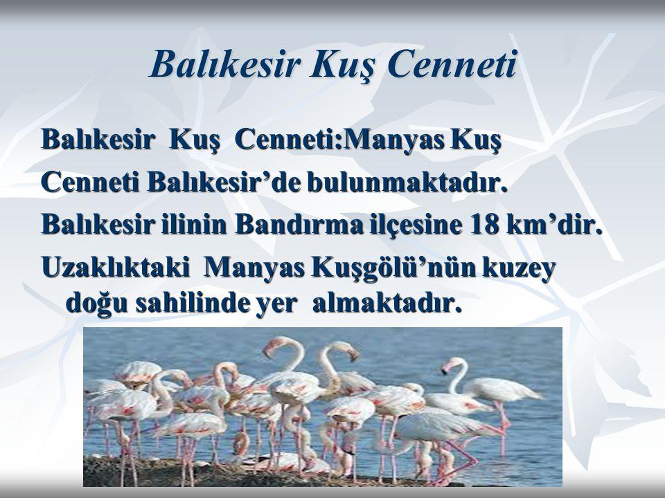 Balıkesir Kuş Cenneti Balıkesir Kuş Cenneti:Manyas Kuş Cenneti Balıkesir'de bulunmaktadır. Balıkesir ilinin Bandırma ilçesine 18 km'dir. Uzaklıktaki M