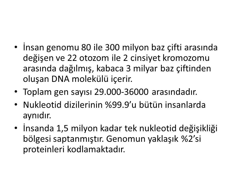 İnsan genomu 80 ile 300 milyon baz çifti arasında değişen ve 22 otozom ile 2 cinsiyet kromozomu arasında dağılmış, kabaca 3 milyar baz çiftinden oluşa