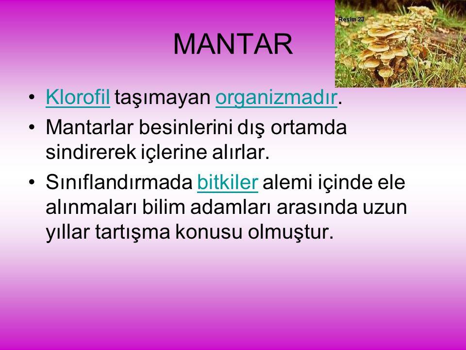 MANTAR Klorofil taşımayan organizmadır.Klorofilorganizmadır Mantarlar besinlerini dış ortamda sindirerek içlerine alırlar. Sınıflandırmada bitkiler al
