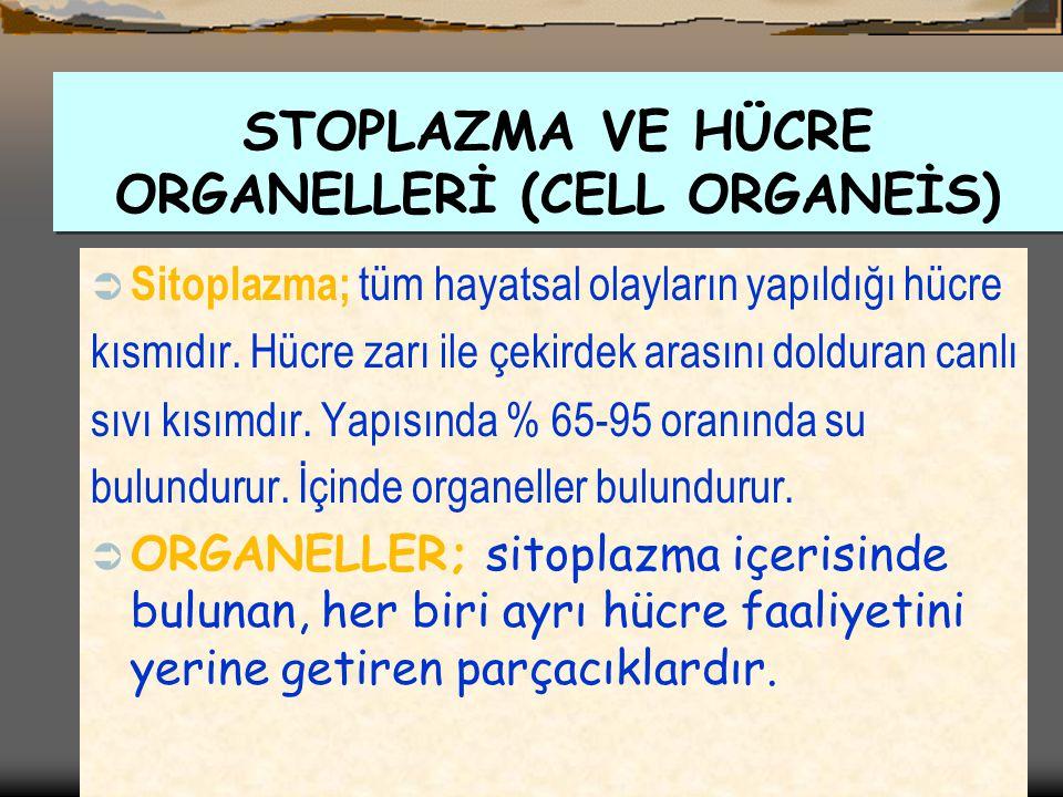  Hücre sitoplazmasının etrafını çevreleyen örtüye hücre zarı denir.Hücre zarı tüm canlı hücrelerinde bulunur.