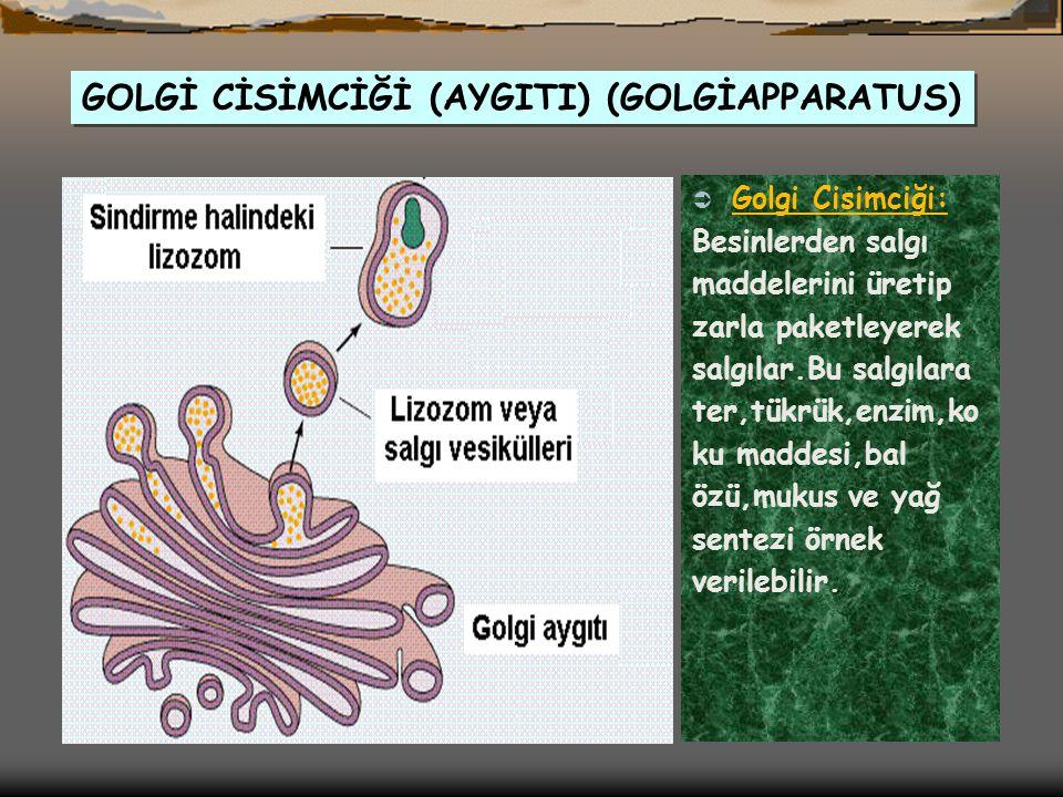 ORGANELLER;  Golgi cisimciği  Ribozom  Mitokondri  Endoplazmik retikulum  Lizozom