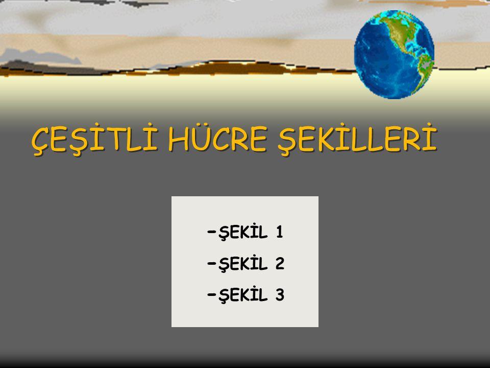 ÇEŞİTLİ HÜCRE ŞEKİLLERİ - ŞEKİL 1 - ŞEKİL 2 - ŞEKİL 3