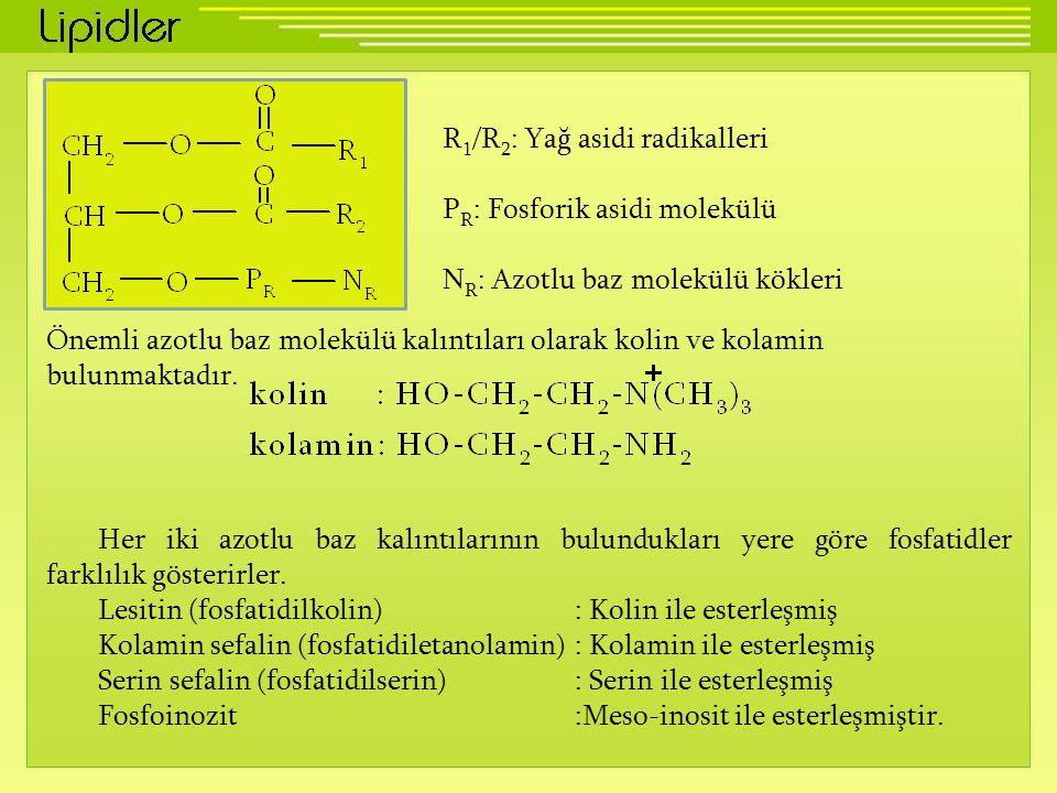 R 1 /R 2 : Yağ asidi radikalleri P R : Fosforik asidi molekülü N R : Azotlu baz molekülü kökleri Önemli azotlu baz molekülü kalıntıları olarak kolin v