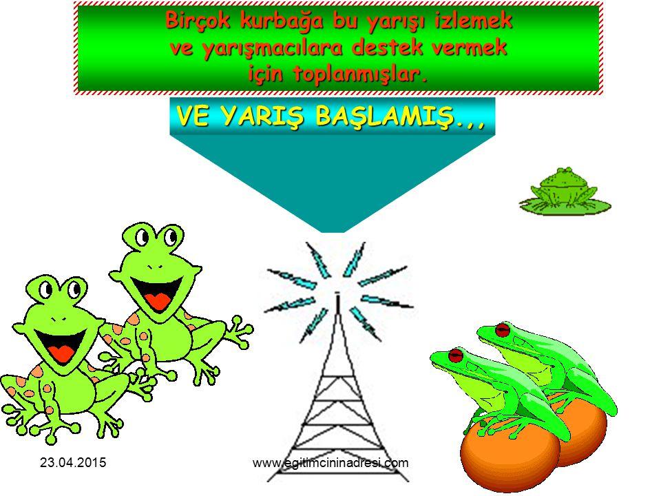 Birçok kurbağa bu yarışı izlemek ve yarışmacılara destek vermek için toplanmışlar.