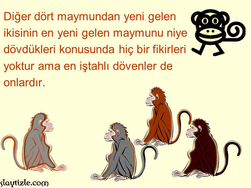 Islak maymunlardan ikincisi de değiştirilir. Bu da ilk atağında diğerleri tarafından cezalandırılır.