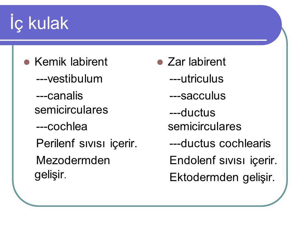 İç kulak Kemik labirent ---vestibulum ---canalis semicirculares ---cochlea Perilenf sıvısı içerir.