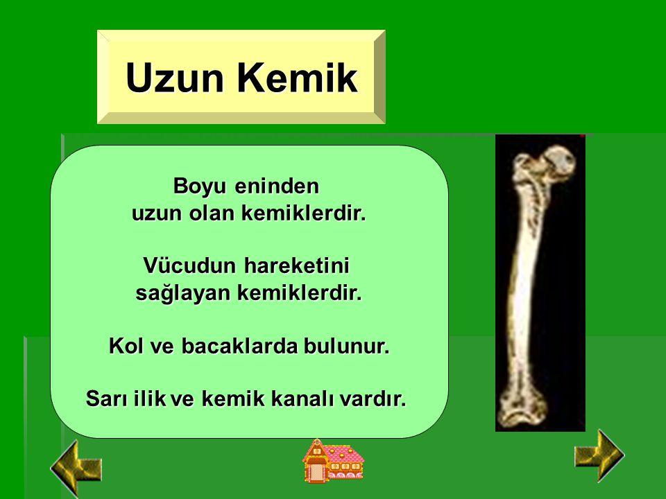 KEMİK ÇEŞİTLERİ Uzun Kemik Uzun Kemik Kısa Kemik Kısa Kemik Yassı Kemik Yassı Kemik