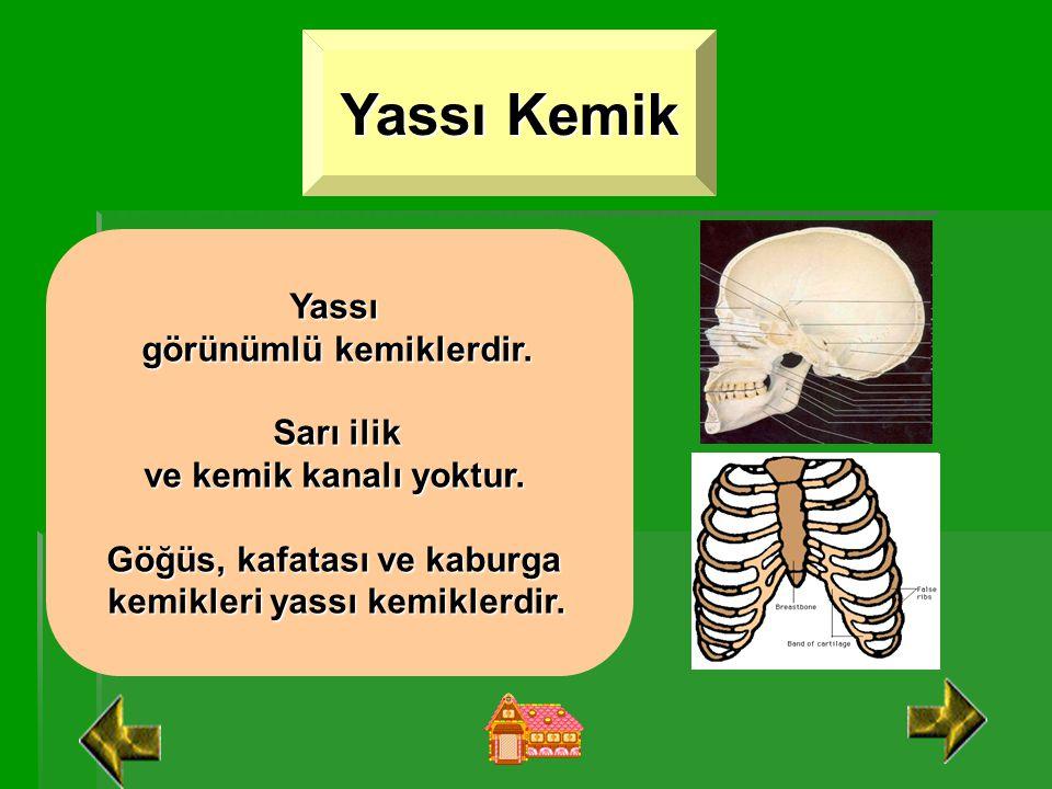 Kısa Kemik Boyu, eni ve genişlikleri hemen hemen aynı olan kemiklerdir. Sarı ilik ve kemik kanalı yoktur. Omurga, el ve ayak bilek kemikleri kısa kemi