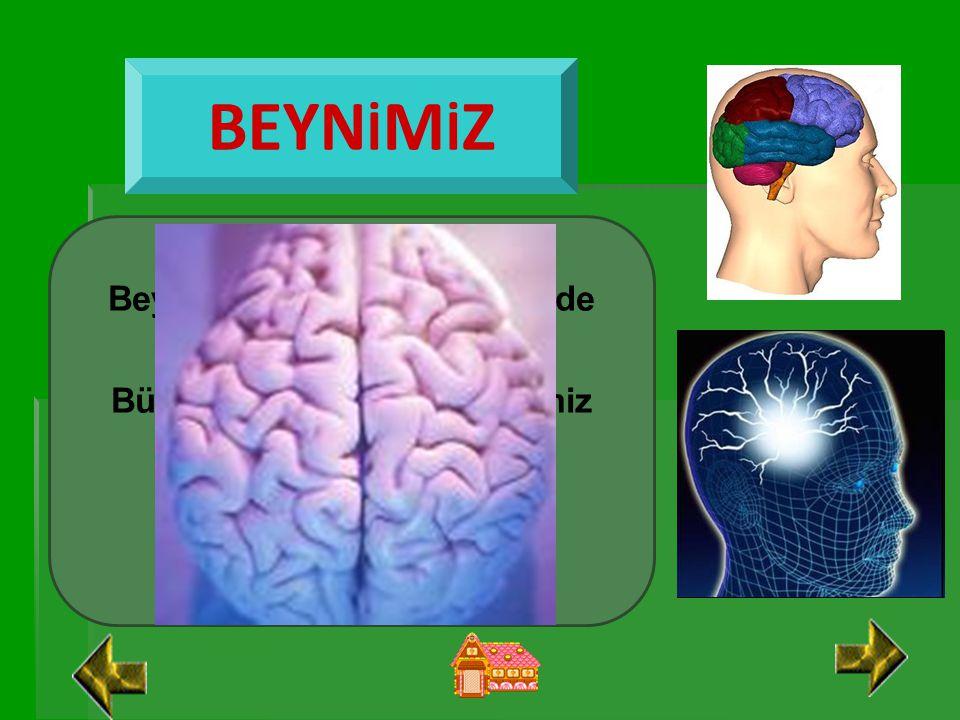 İÇ ORGANLARIMIZ Vücudumuzun iç kısmında bulunan organlarımızdır. Gözümüzle iç organlarımızı göremeyiz.