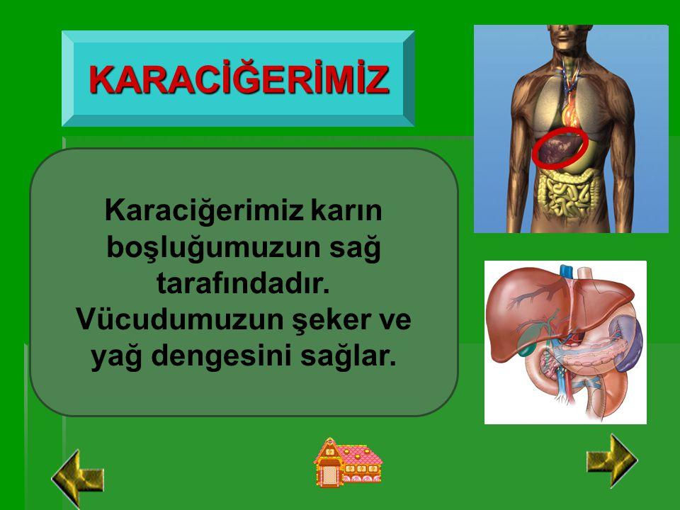 AKCİĞERLERİMİZ Akciğerlerimiz göğüs boşluğu dediğimiz yerde bulunurlar. Sağda ve solda olmak üzere 2 tanedirler. Görevi soluk alma ve verme yoluyla ka