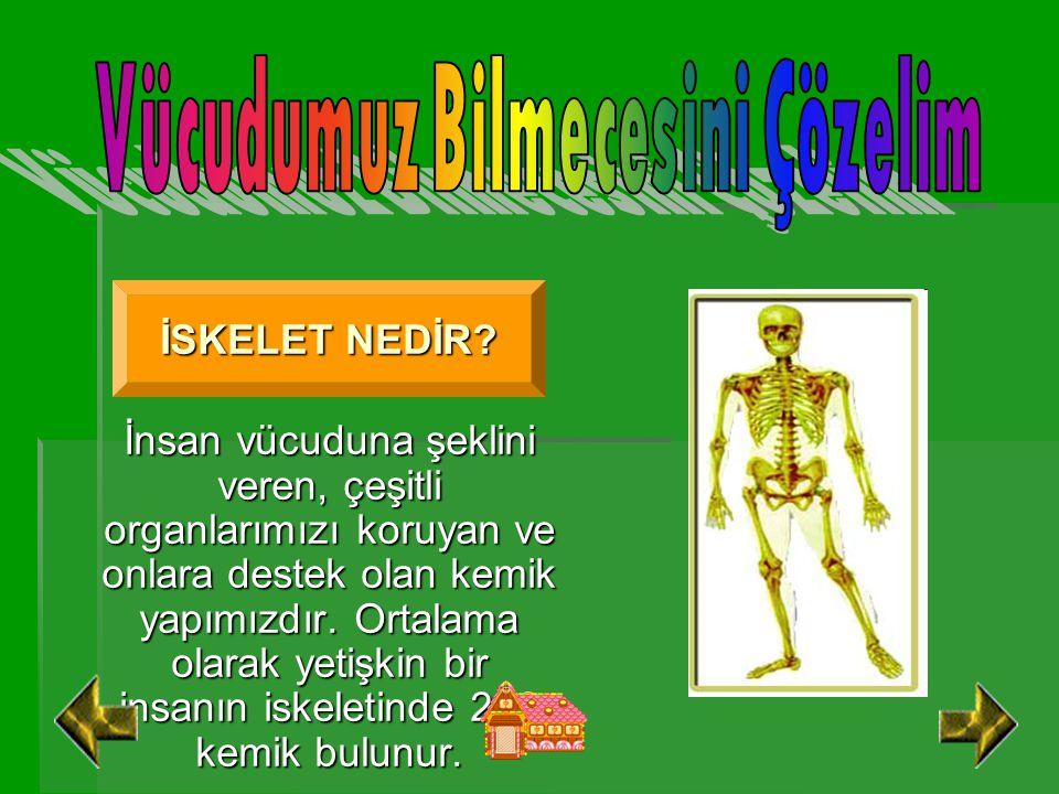 İnsan vücuduna şeklini veren, çeşitli organlarımızı koruyan ve onlara destek olan kemik yapımızdır.