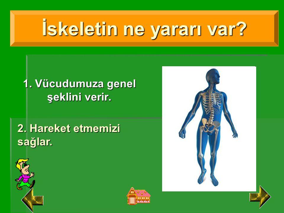 İnsan vücuduna şeklini veren, çeşitli organlarımızı koruyan ve onlara destek olan kemik yapımızdır. Ortalama olarak yetişkin bir insanın iskeletinde 2