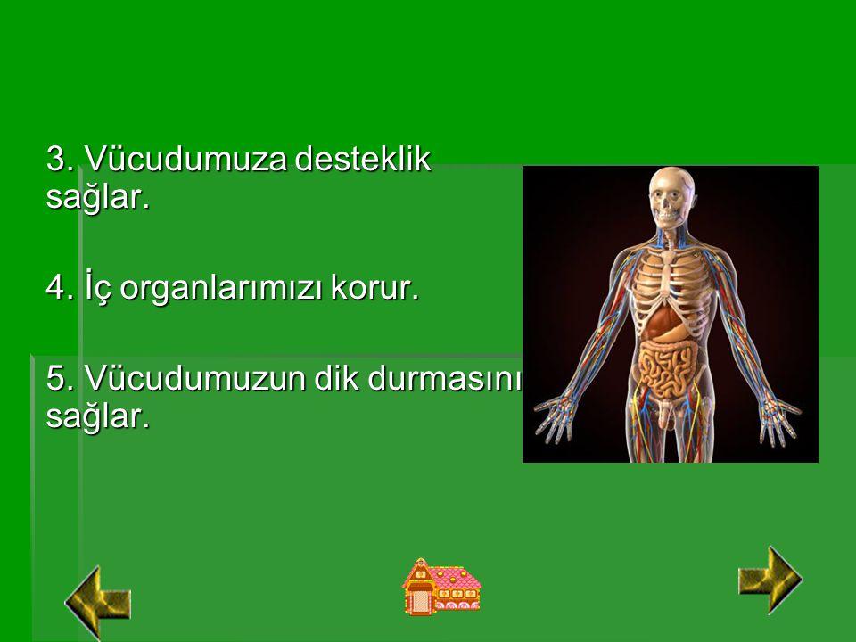 3. Vücudumuza desteklik sağlar. 4. İç organlarımızı korur. 5. Vücudumuzun dik durmasını sağlar.