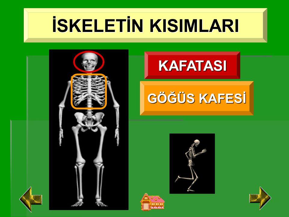 Kısa Kemik Boyu, eni ve genişlikleri hemen hemen aynı olan kemiklerdir.