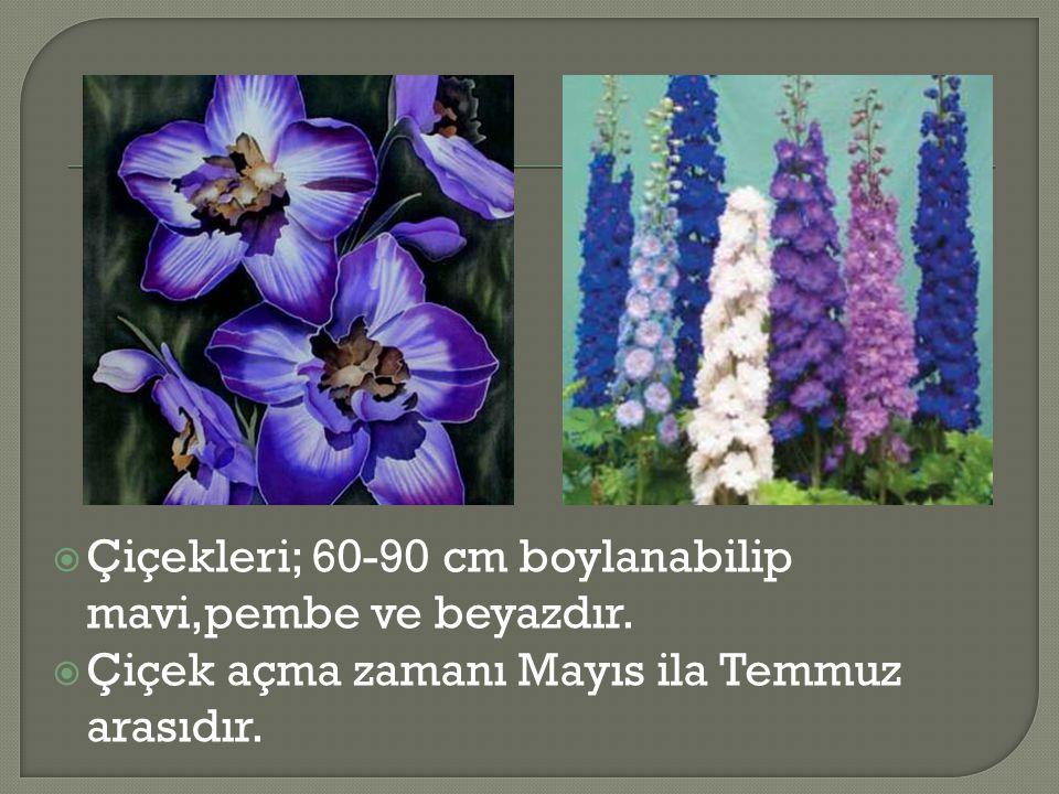  Çiçekleri; 60-90 cm boylanabilip mavi,pembe ve beyazdır.