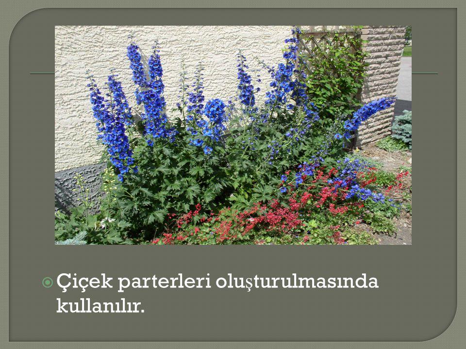  Çiçek parterleri olu ş turulmasında kullanılır.