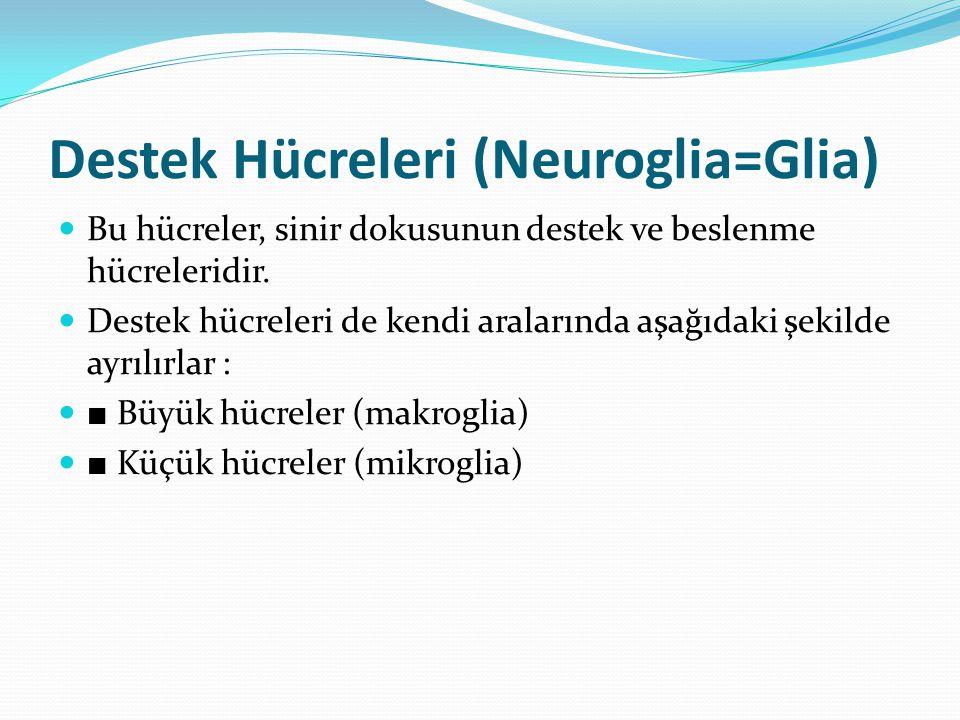 Destek Hücreleri (Neuroglia=Glia) Bu hücreler, sinir dokusunun destek ve beslenme hücreleridir. Destek hücreleri de kendi aralarında aşağıdaki şekilde