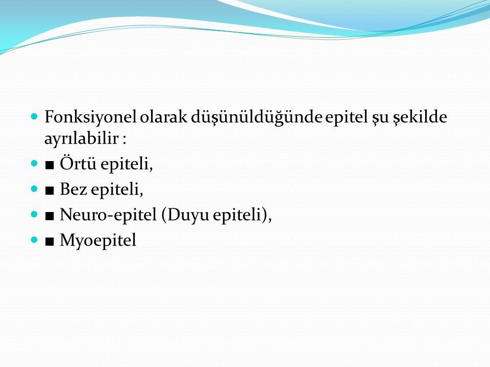 Fonksiyonel olarak düşünüldüğünde epitel şu şekilde ayrılabilir : ■ Örtü epiteli, ■ Bez epiteli, ■ Neuro-epitel (Duyu epiteli), ■ Myoepitel