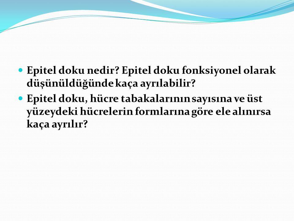 Epitel doku nedir? Epitel doku fonksiyonel olarak düşünüldüğünde kaça ayrılabilir? Epitel doku, hücre tabakalarının sayısına ve üst yüzeydeki hücreler